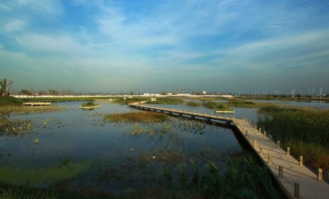 夏津县九龙口人工湿地